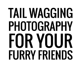 Tail wagging photography for your furry friend.